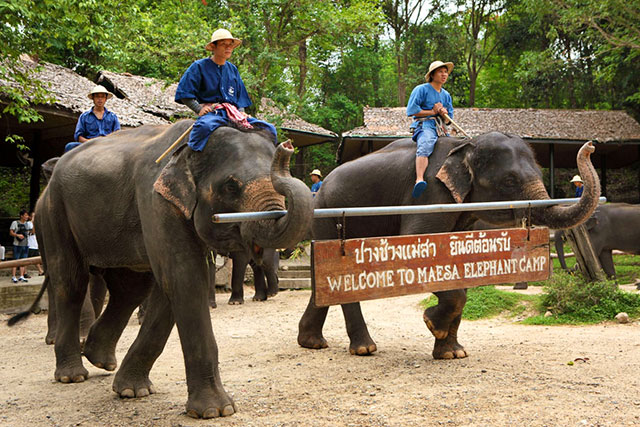 Mae Sa Elephant Camp - 10 Places to Discover the Essence of Chiang Mai